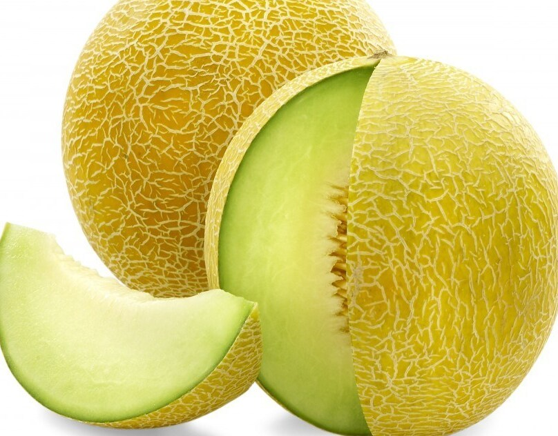 cara menanam melon dalam polybag